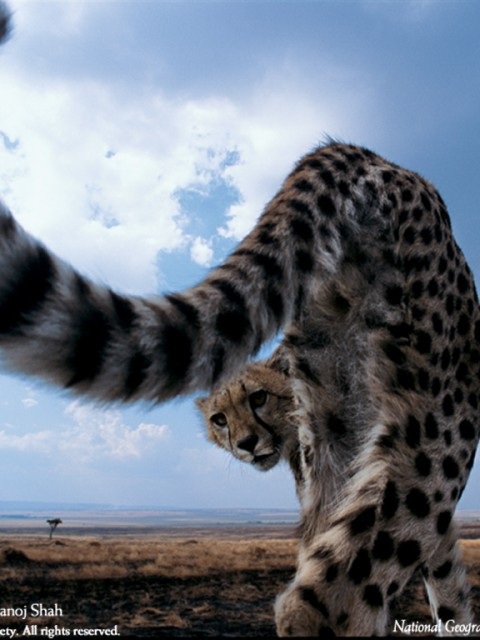 Лучшие фото National Geographic 2005